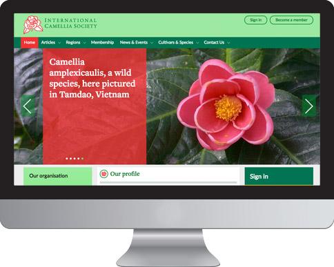 international camellia mac screen